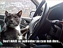 Click image for larger version.  Name:funny-pictures-cat-threatens-his-children-while-driving1.jpg Views:202 Size:32.5 KB ID:172715